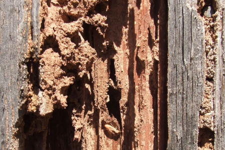 4 Signs Of Termite Damage In Your Home Bug Bombers